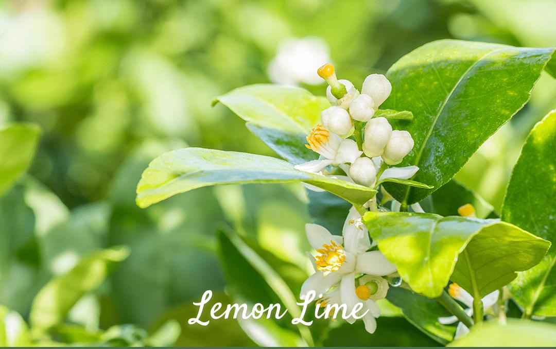 Lemon lime レモンライム